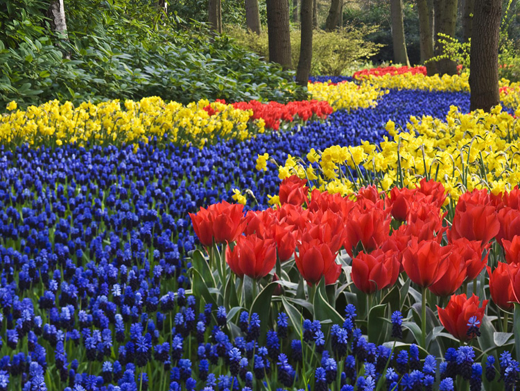 Keukenhof  Gardens Lisse Holland,  The Netherlands